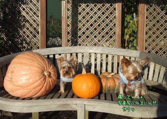071031-halloween6.jpg