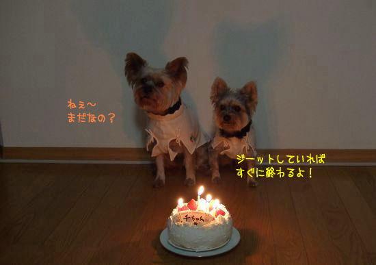 080115-birthday3.jpg