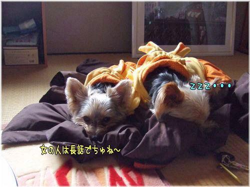 080115-yuki11.jpg