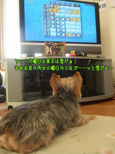 080120-tv2.jpg