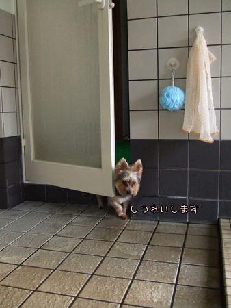 080125-furo1.jpg