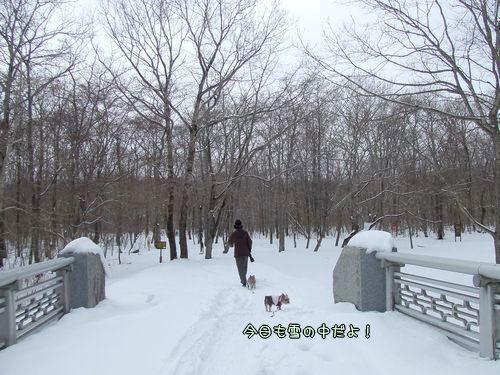 080228-nisiki2.jpg