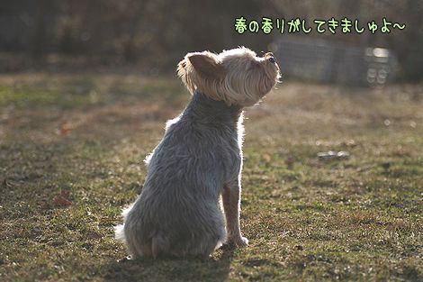 080402-niwa2.jpg