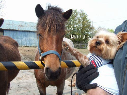 080522-pony2.jpg