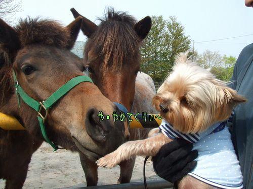 080522-pony3.jpg