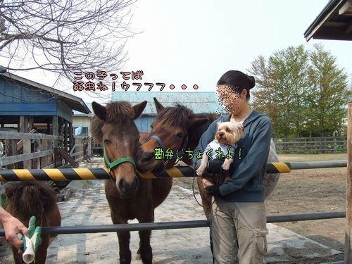 080522-pony4.jpg