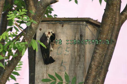 080620-komukudori2.jpg