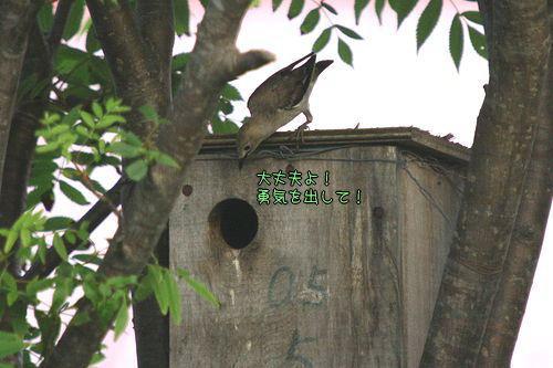 080620-komukudori3.jpg
