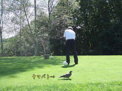 080904-golf2.jpg