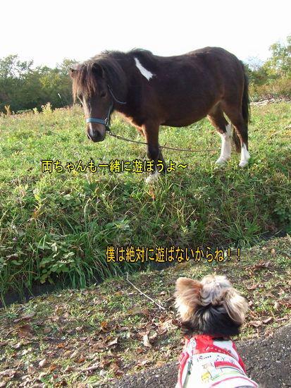 081007-ponny3.jpg