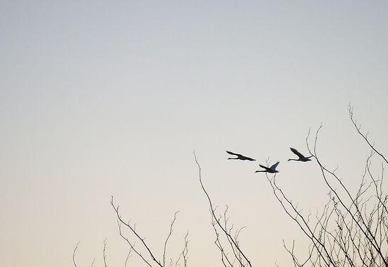 081110-swan2.jpg
