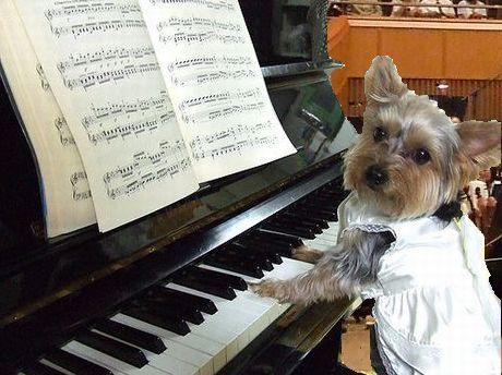 piano1-k.jpg