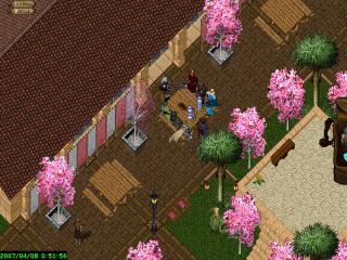 マジンシアの桜