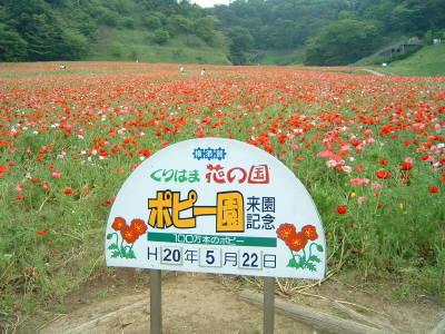 kurihamahanakuni1.jpg