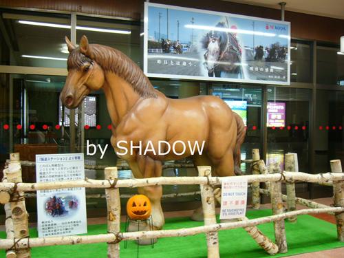 帯広空港の馬