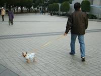 パパと歩く振り向き