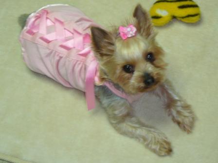 ピンク伏せ