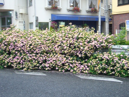 道路沿いのきれいなお花