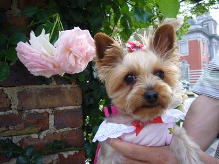 大輪のピンクのバラの前で