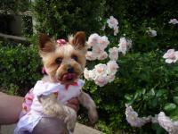 薄ピンクのバラの前で