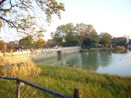 万代池公園景色