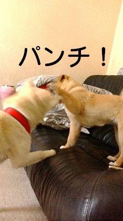 チョコ&仔犬