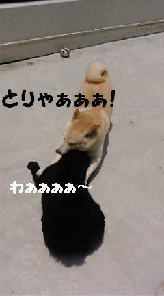 ふぅ チョコ