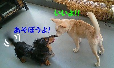 ジョイ&のんちゃん