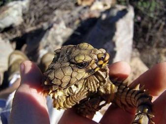 Lizard5.jpg