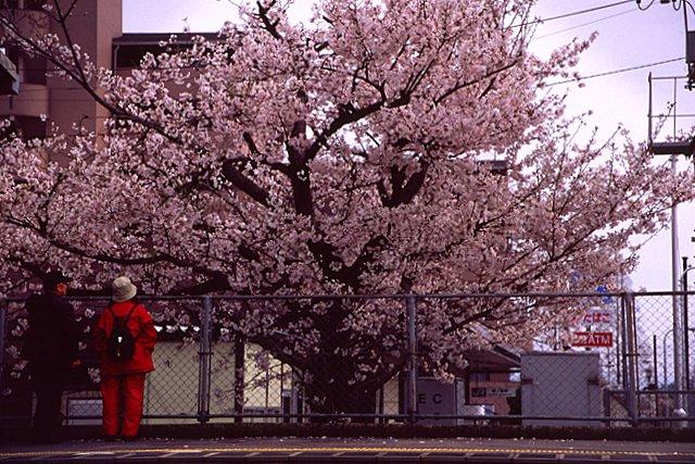 sakuranomiya-2-17-11.jpg