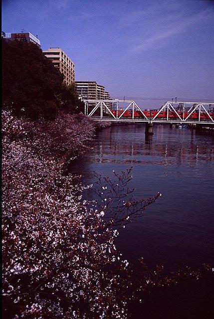 sakuranomiya12-11.jpg