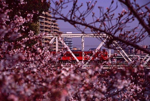 sakuranomiya14-11.jpg
