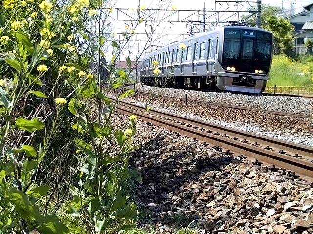 yamasaki321-5-100.jpg