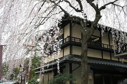 三年坂_桜