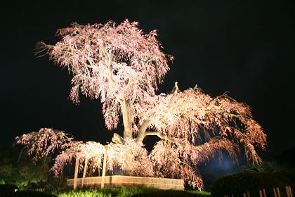 円山公園_1
