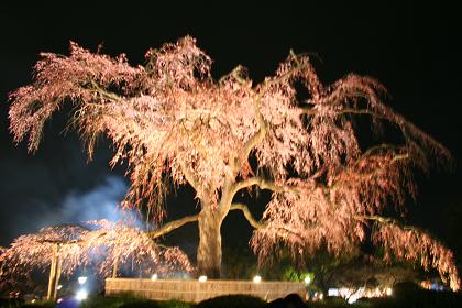 円山公園_3