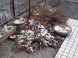 080203_hatsuyuki.jpg