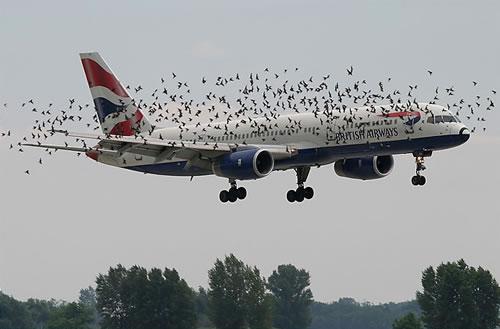 Bird-Swarm.jpg