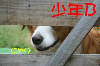 IMG_0029_sh01.jpg