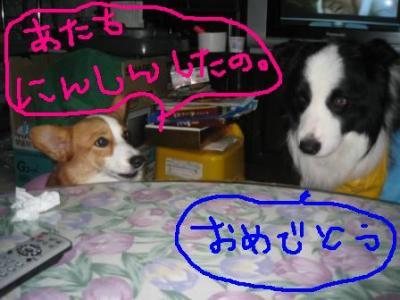 犬同士の会話