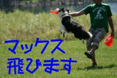 IMG_1338_sh01.jpg