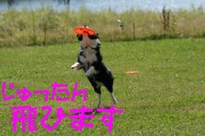IMG_1354_sh01.jpg