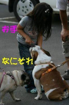 IMG_1442_sh01.jpg
