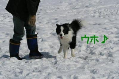 ハイパー犬しゅう