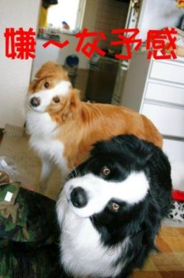 考える犬4