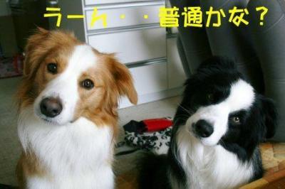 考える犬2
