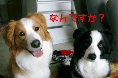 考える犬1