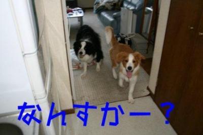 呼ばれた犬たち