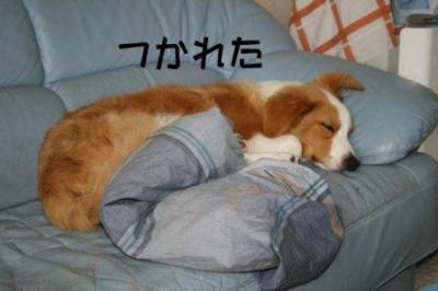 爆睡るいちん