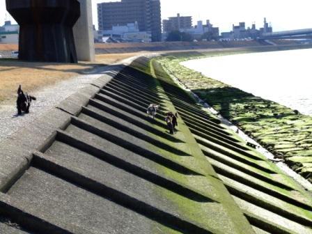 2008.2.17 横川河川敷にて 032